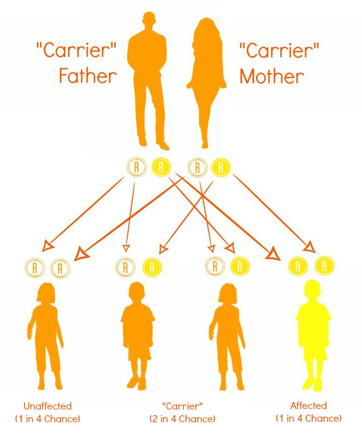 npd-chart